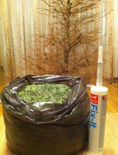 las-mejores-fotos-de-navidad-fotos-GRACIOSAS-arbol-sin-hojas-pegamento