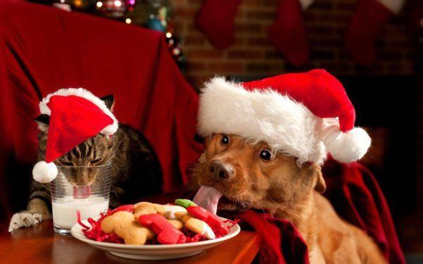 las-mejores-fotos-de-navidad-fotos-perro-gato-comiendo