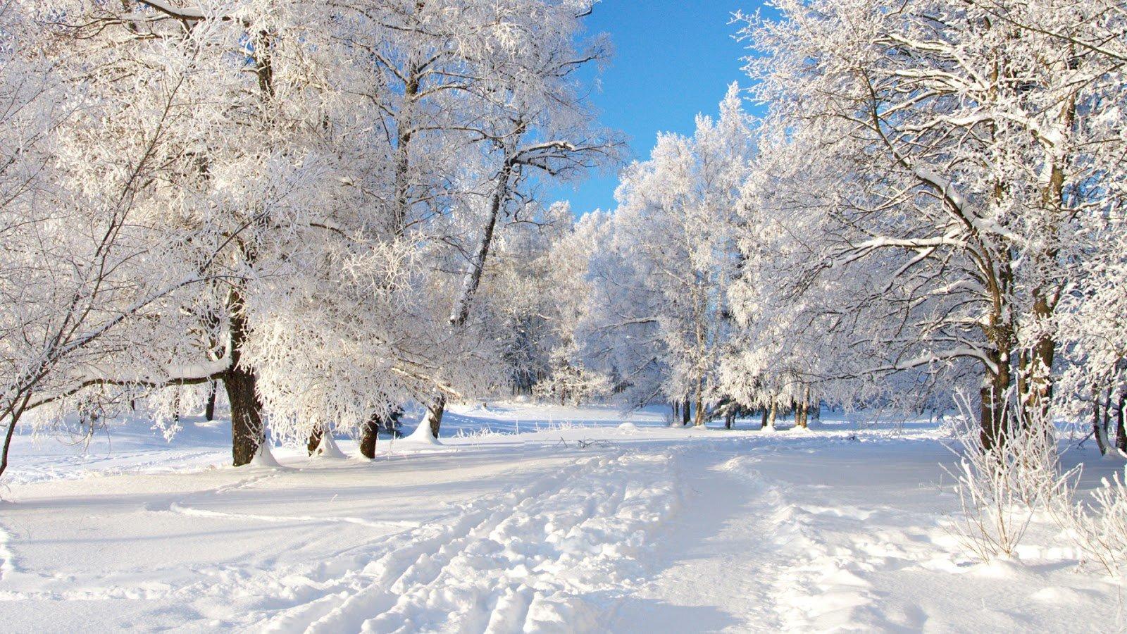 las-mejores-fotos-de-paisajes-nevados-arboles