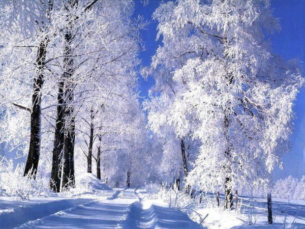 las-mejores-fotos-de-paisajes-nevados-bosque