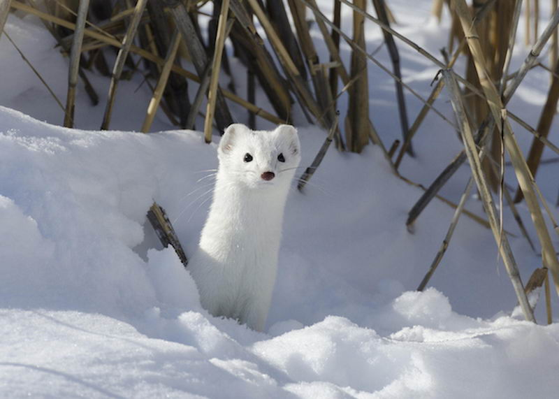 las-mejores-fotos-de-paisajes-nevados-fauna
