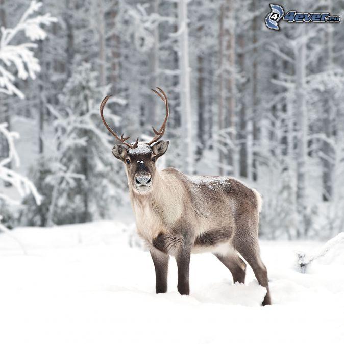 las-mejores-fotos-de-paisajes-nevados-reno