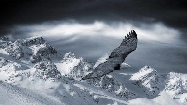 las-mejores-fotos-de-paisajes-nevados-visa-salvaje
