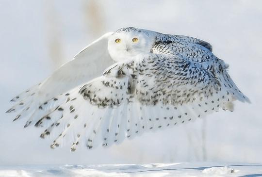 las-mejores-fotos-de-paisajes-nevados-vuelo-buho