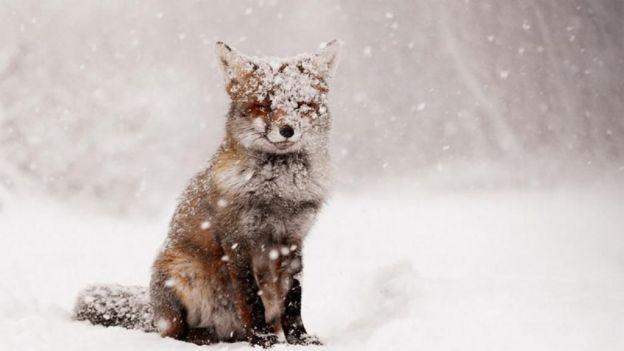 las-mejores-fotos-de-paisajes-nevados-zorro