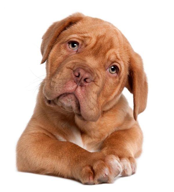 las-mejores-fotos-de-perros-cachorros