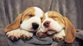 Las mejores fotos de perros