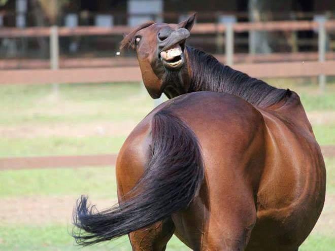 las-mejores-fotos-de-risa-caballo