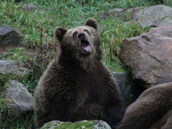 las-mejores-fotos-de-risa-oso
