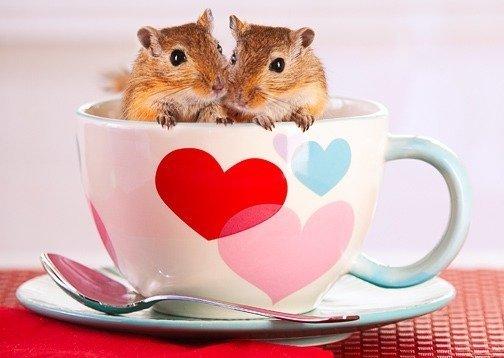 las-mejores-fotos-de-san-valentin-animales-taza