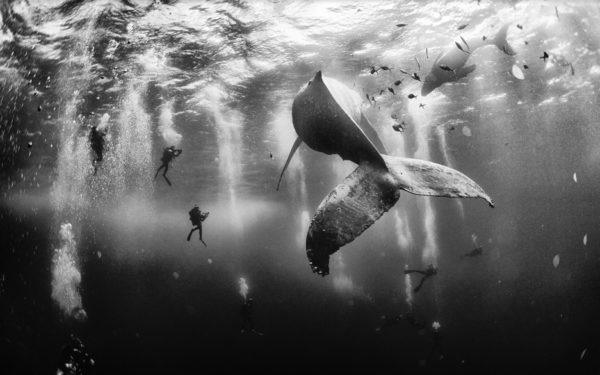 las-mejores-fotos-de-viaje-de-2015-segun-de-national-geographic-revillagigedo-mexico