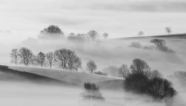 Las mejores fotos en blanco y negro arboles campiña niebla