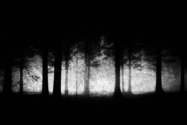 Las mejores fotos en blanco y negro  bosque frondoso