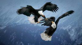 Las mejores fotos de aves