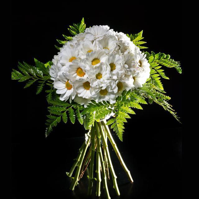 ... margaritas2 source http haciendofotos com fotos de flores margaritas