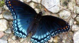 Las mejores fotos de mariposas