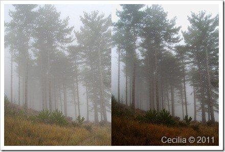 mdelo fotos con y sin niebla