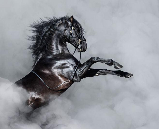 Mejores fotos de caballos bravo