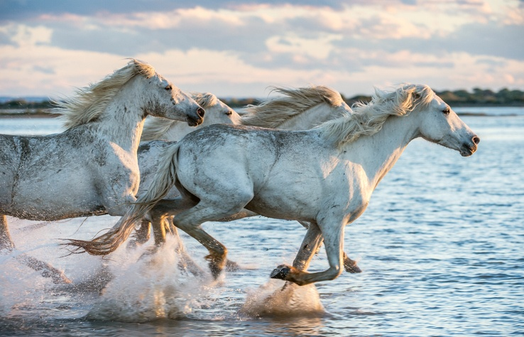 Mejores fotos de caballos mar