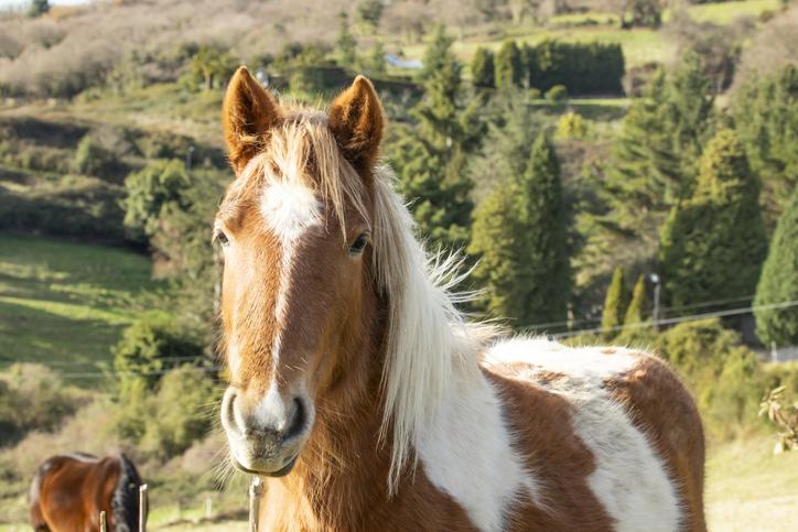 Mejores fotos de caballos negro manchas