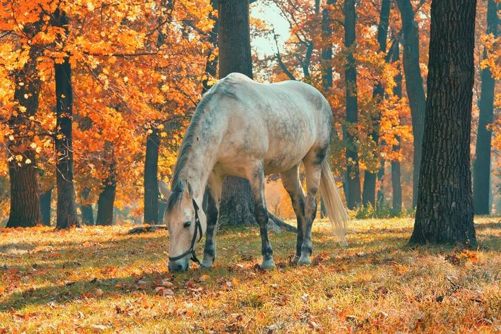 Mejores fotos de caballos otoño
