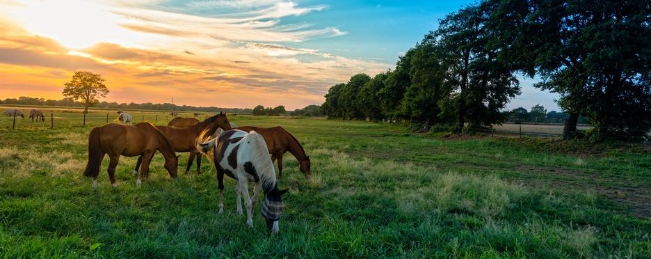 Mejores fotos de caballos pasto