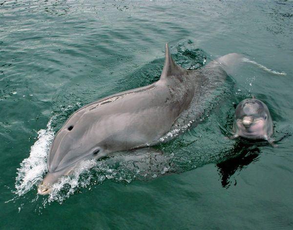 Mejores fotos de delfines 2018 delfin bebe