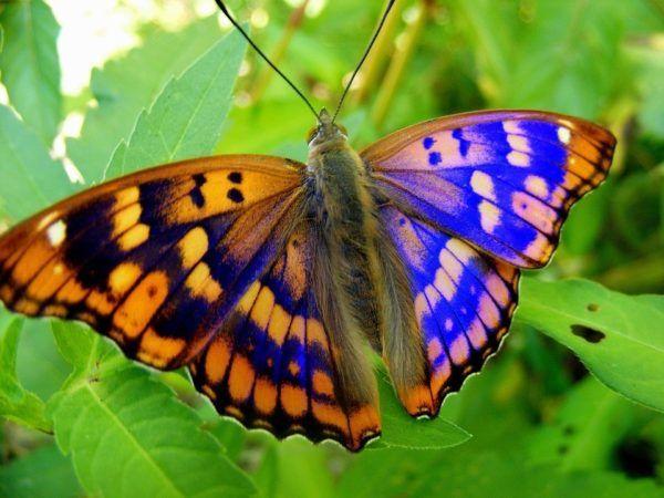 Imagenes De Mariposas De Colores: Las Mejores Fotos De Mariposas 2019