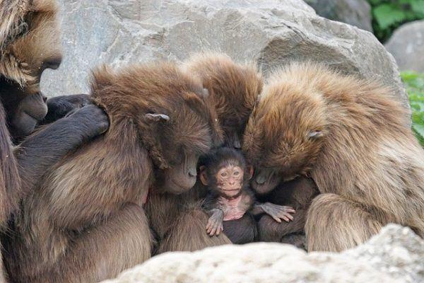 Las Mejores Fotos De Monos 2019