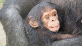 Las mejores fotos de monos 2018