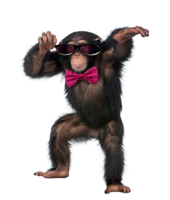 Mejores fotos de monos 2018 mono vestido gafas