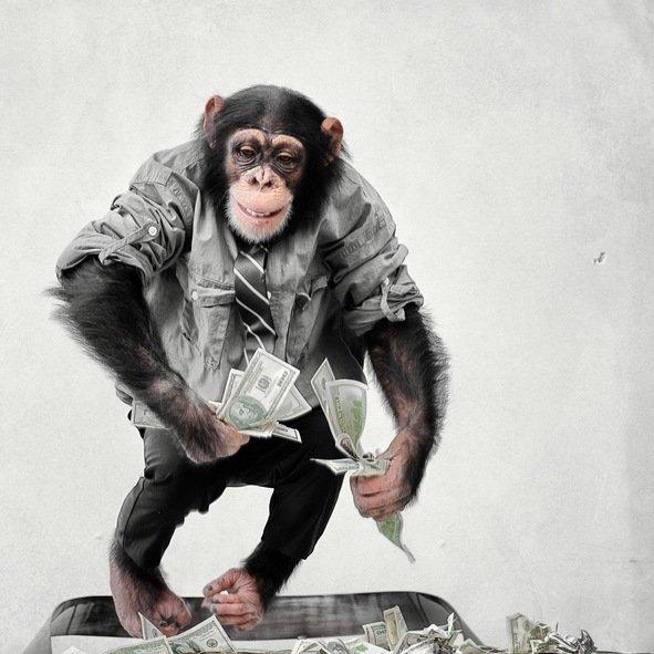 Mejores fotos de monos 2018 mono vestido