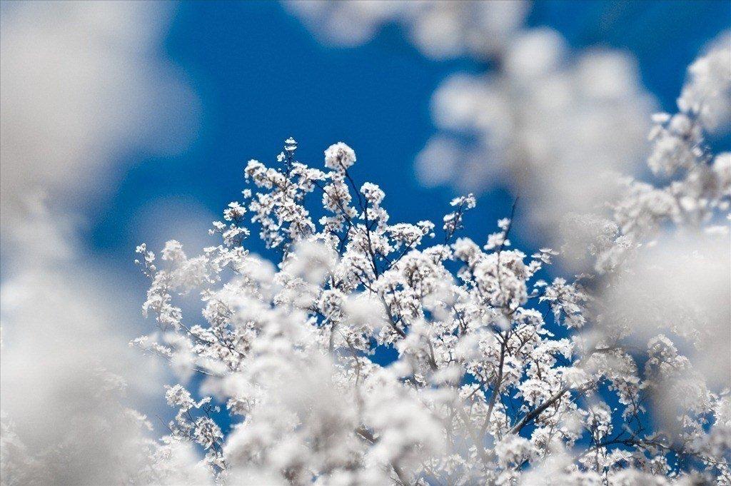 mejores-fotos-de-nieve.jpg
