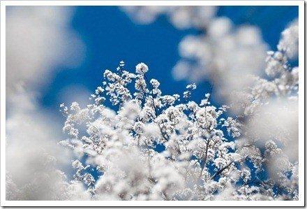 mejores fotos de nieve
