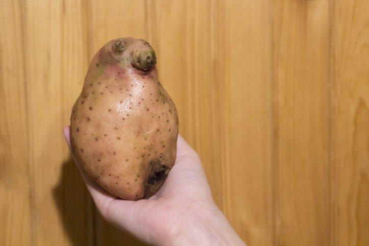 Mejores fotos de risa 2018 para compartir patata