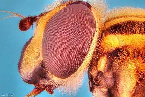 mejores-fotos-insectos-de-cerca