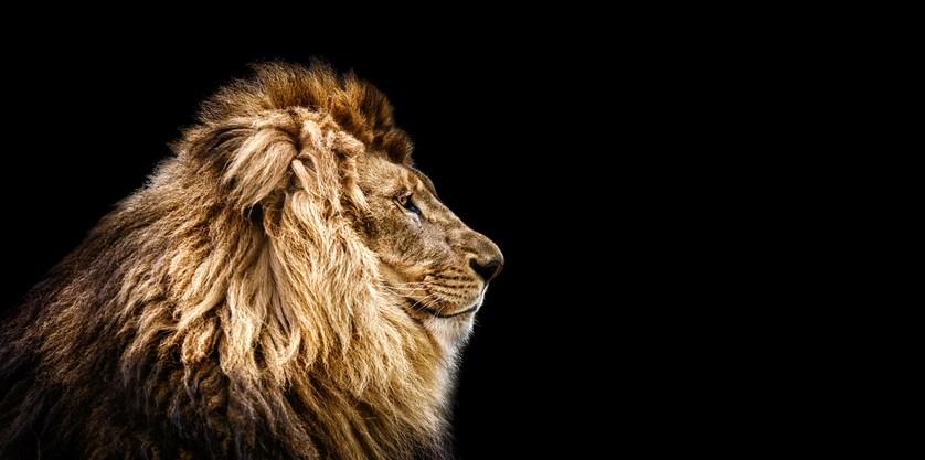 Mejores fotos leones