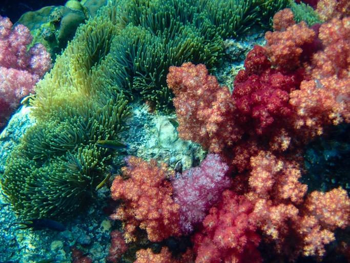 Mejores fotos mar coral