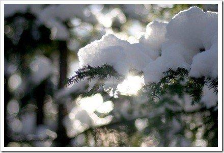 nieve arbol
