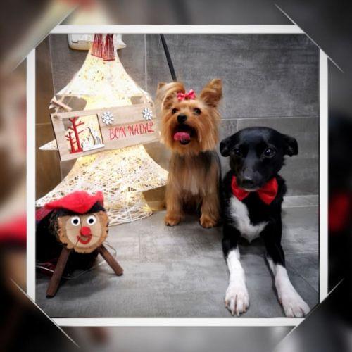 Foto postal de Navidad de mascotas