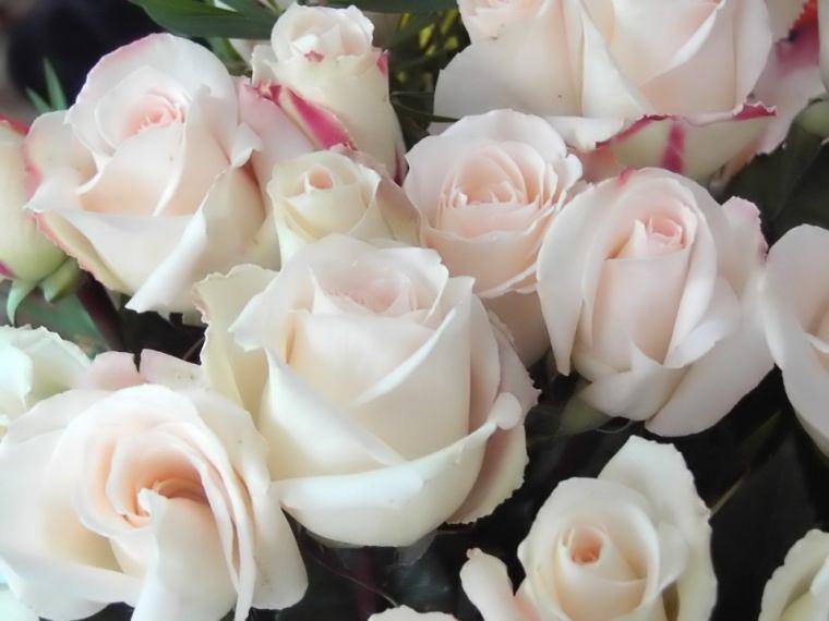 Fotos de flores | Rosas