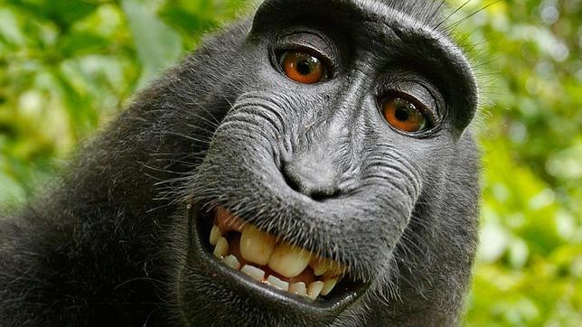 selfie-mono