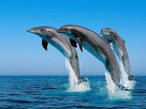 Las mejores fotos de delfines