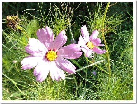 Los pétalos de las flores están a la luz directa y pierden sus colores