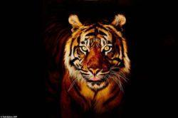 Las mejores fotos de tigres